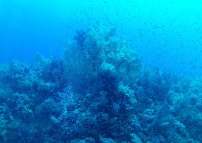 Arasub-civitanova-a-soma-bay-egitto (41)