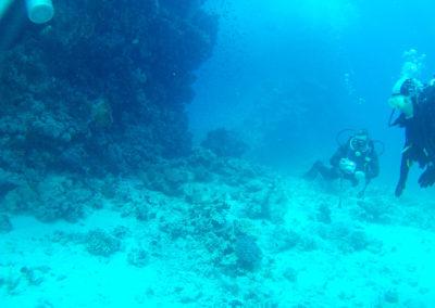 Arasub-civitanova-a-soma-bay-egitto (45)