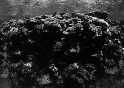 Arasub-civitanova-a-soma-bay-egitto (53)