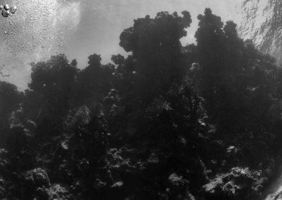 Arasub-civitanova-a-soma-bay-egitto (56)