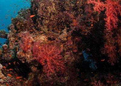 Arasub-civitanova-a-soma-bay-egitto (6)