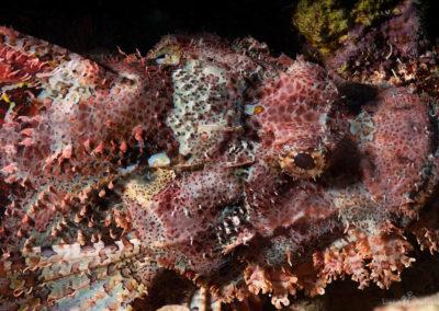 Arasub-civitanova-a-soma-bay-egitto (63)