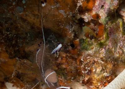 Arasub-civitanova-a-soma-bay-egitto (64)