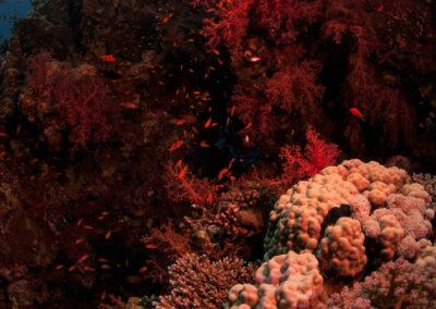 Arasub-civitanova-a-soma-bay-egitto (7)