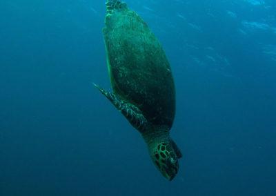 Arasub-civitanova-in-crociera-makana-alle-maldive (13)
