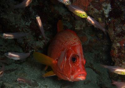 Arasub-civitanova-in-crociera-makana-alle-maldive (18)