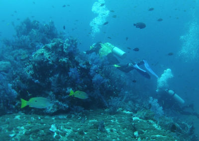 Arasub-civitanova-alle-isole-similan-thailandia-121.jpg